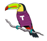 Toucan wearing a pullover Royalty Free Stock Photo