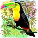 Toucan Wild Bird from Amazon Rainforest Stock Images