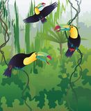 Toucans illustration stock