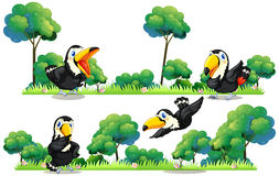Toucans flying in the garden Royalty Free Stock Image