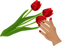 Touch. Hand tenderly touches to red flower. Vector Royalty Free Stock Photography
