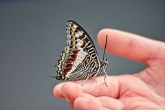 Touch a Butterfly. A young hand reaches out and a butterfly lands and stops to rest Stock Photos