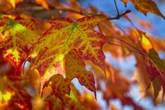 A touch of fall color royalty free stock photo