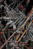 A Touch of Frost 4 - Scotland. Frosted foliage & undergrowth in a Scottish winter Stock Photo