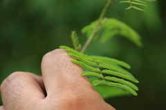 Touch. Human plant relationship is a touching and emotional moment Royalty Free Stock Photo