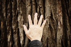 Touch the nature stock photography