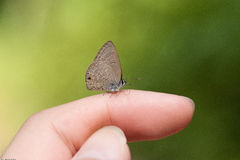 Touch the nature with butterfly Royalty Free Stock Images