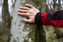 The Touch of Nature. Image of The Touch of Nature Stock Images