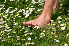 In touch with nature. Walking barefoot through a meadow full of flowers Stock Images