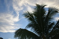 Touch the sky. Tropical tree against sky Stock Image
