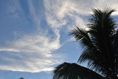 Touch the sky. Tropical tree against sky Royalty Free Stock Photo
