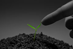 Touch to plant Stock Photography