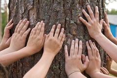 Touch to a tree Stock Image