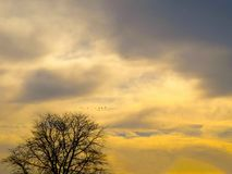A Touch Of Yellow And Gold Through The Sky stock photo