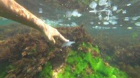 Touchant une méduse sous l'eau banque de vidéos