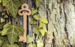 Touche fonctions étendues cachée dans l'arbre photos stock