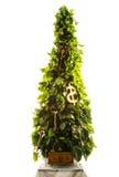 Touches fonctions étendues sur l'arbre de nouvelle année Photographie stock