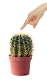 Touching a cactus Stock Photos