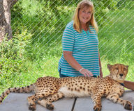 Touching cheetah stock photography