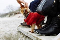 Touching dog at the beach royalty free stock photography