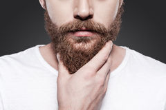 Touching his perfect beard. Royalty Free Stock Photos