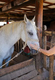 Touching horse Stock Photos