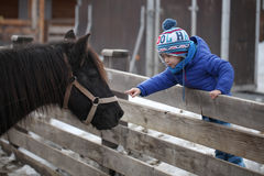 Touching the horse. Small kid touching the horse with his finger Royalty Free Stock Photography