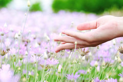Touching the nature Royalty Free Stock Images