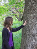 Woman touching oak tree Royalty Free Stock Images