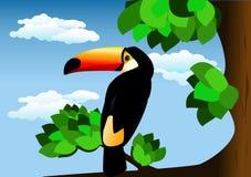 ToucN BIRD Stock Photo