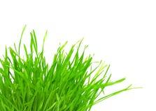 touffe de vert d'herbe Image libre de droits