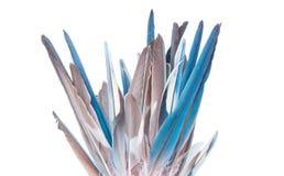 Touffe des plumes Image libre de droits