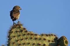Tough bird Stock Photography