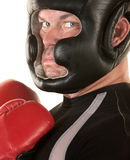 Tough Boxer Staring Royalty Free Stock Photos
