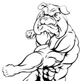 Tough bulldog character punching. A tough muscular bulldog character sports mascot attacking with a punch Stock Photos