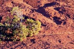 Tough bush grows from crack in rock. Tough bush grows from crack in sandstone in arid Canyonlands NP near Moab, Utah, USA Stock Photos