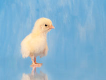 Tough Chick Stock Image