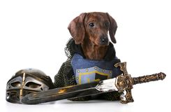 Tough dog Royalty Free Stock Image