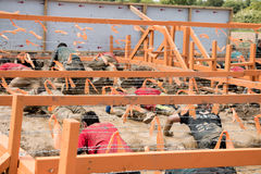 Tough Mudder 2015: Inches of Wire. Boughton House, Northamptonshire, UK - May 31, 2015: Tough Mudders inch under barbed wire at the Kiss of Mud obstacle at the stock photo
