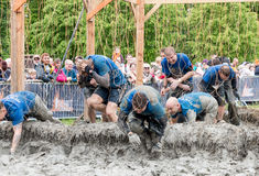 Tough Mudder 2015: MNDA. Boughton House, Northamptonshire, UK - May 31, 2015: Team MNDA endures the shocking treatment of the electroshock therapy obstacle at stock photos