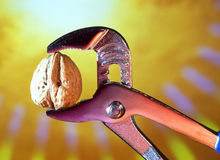 Tough Nut to Crack in jaws of a pipe grip. Concept image Tough Nut to Crack cracking walnut in jaws of a pipe grip royalty free stock photography
