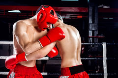 Tough opponents are sparing with each other Royalty Free Stock Photo