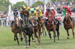 Tough race between the race horses and jockeys Stock Photos