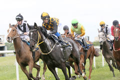 Tough race between the race horses Royalty Free Stock Images