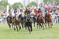 Tough race between the race horses Royalty Free Stock Photo