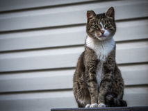 A tough street cat with green eyes looking in the camera. A tough street cat with green eyes royalty free stock photos