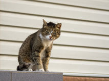 A tough street cat with green eyes looking in the camera. At the street stock photos