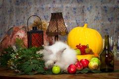 Toujours au jour du thanksgiving avec des légumes d'automne, fruit, pompe Image libre de droits