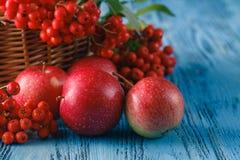 Toujours la vie automnale avec les pommes et la sorbe Photos stock