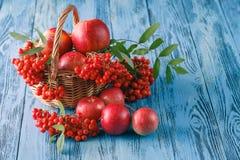 Toujours la vie automnale avec les pommes et la sorbe Photographie stock